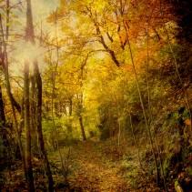 Healing Through Nature, Part 2