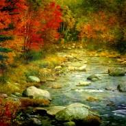 Healing Through Nature, Part 1